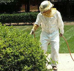 removing hornets