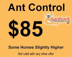 ant control coupon