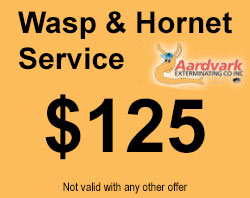 wasp and hornet pest control coupon